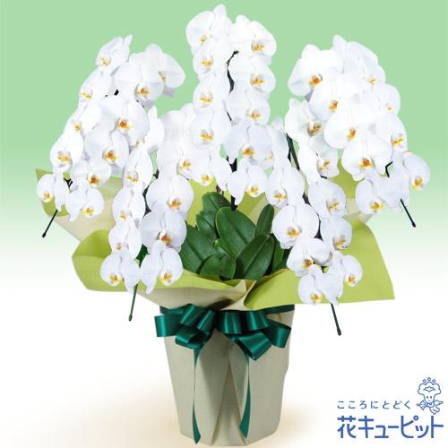 花キューピット【公式サイト】お...