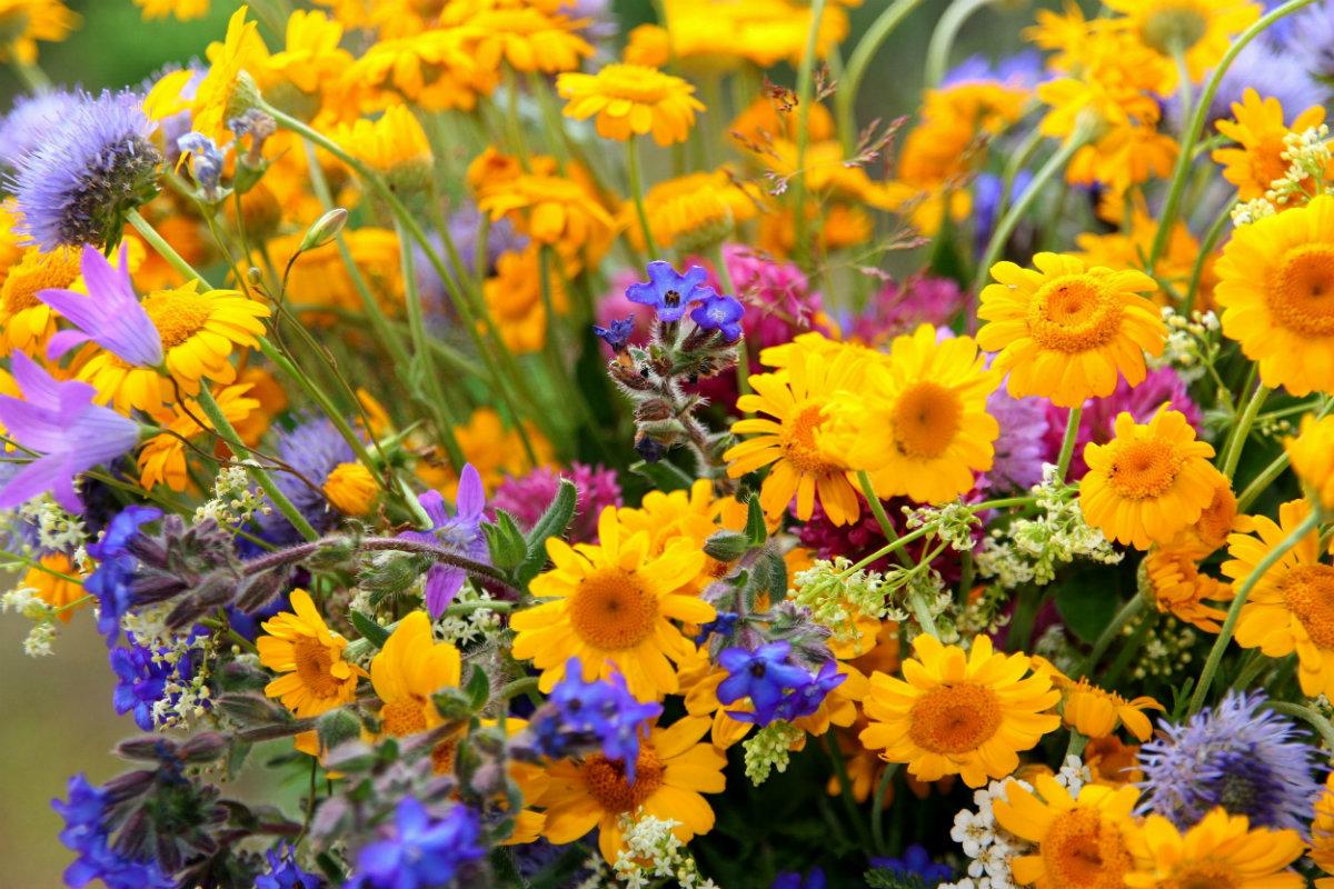 花言葉のイロハ