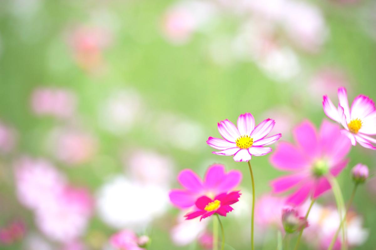 花贈りカレンダー 10月・11月・12月