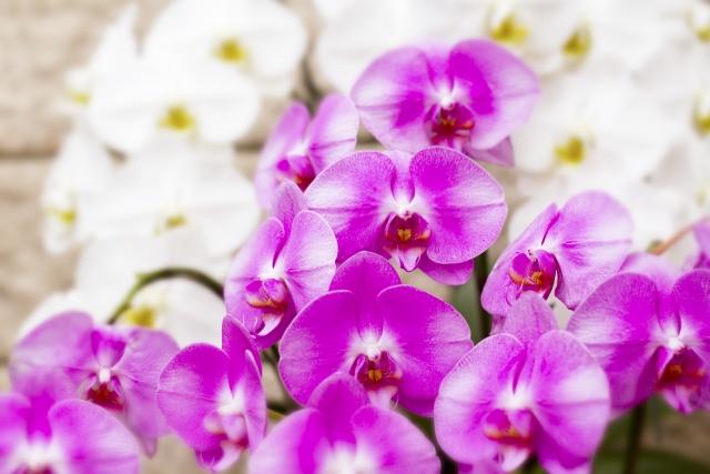 【開店・開業祝い】花贈りのポイント