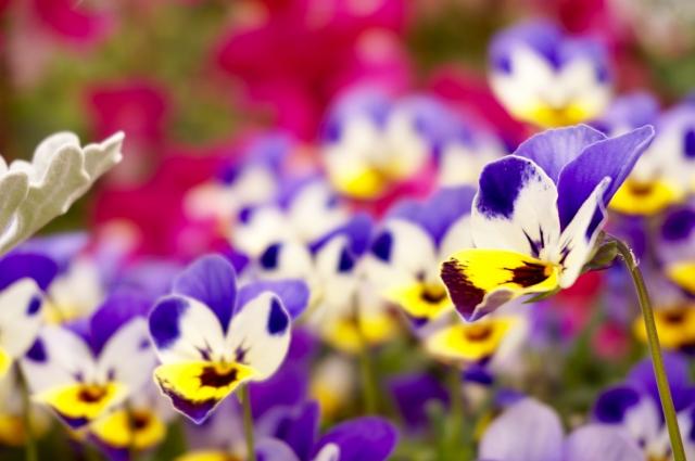寒い季節でもあざやかな冬の花