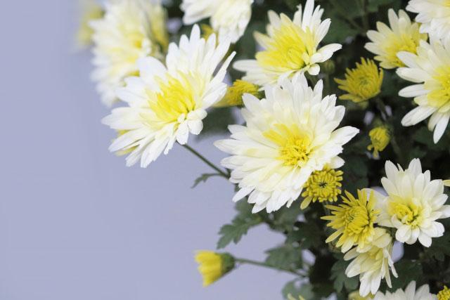 お彼岸にお供えする花の選び方