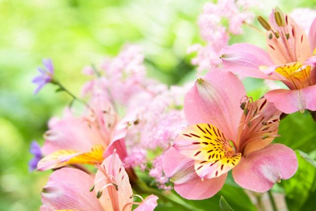 4月の誕生花・未来を照らす「アルストロメリア」