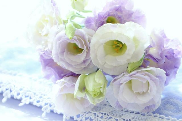 8月の誕生花のご紹介 ~フリルが可愛らしいトルコキキョウ~