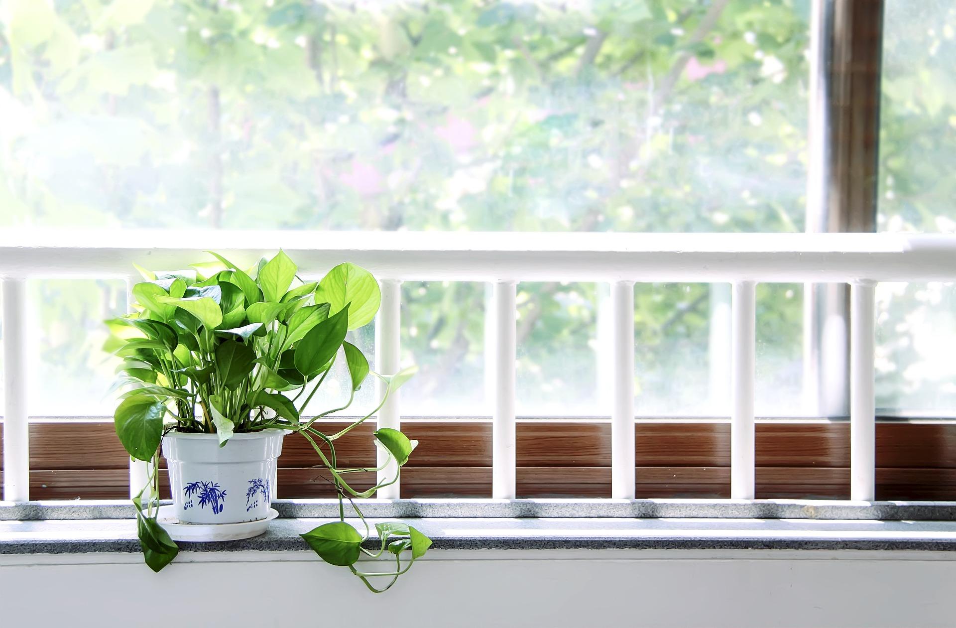 近頃話題の観葉植物を育ててみませんか?