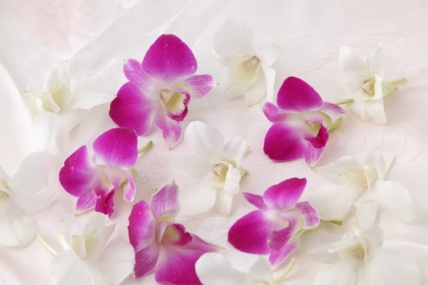 9月の誕生花のご紹介 ~気品と可愛らしさを持つデンファレ~