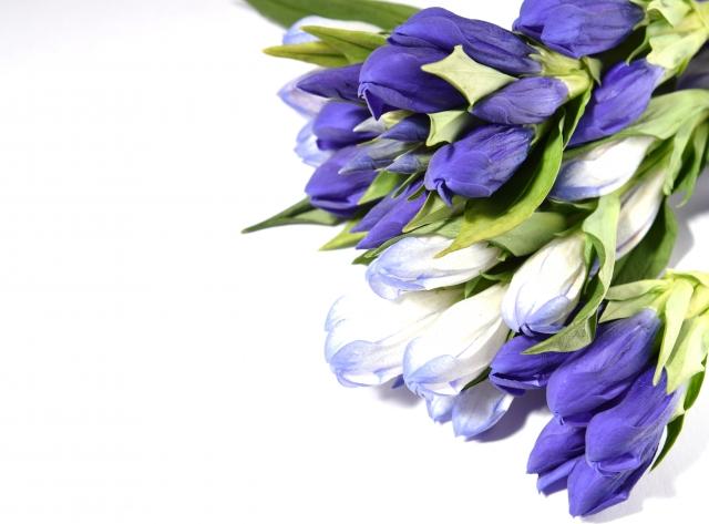 敬老の日に人気のお花 りんどうのご紹介