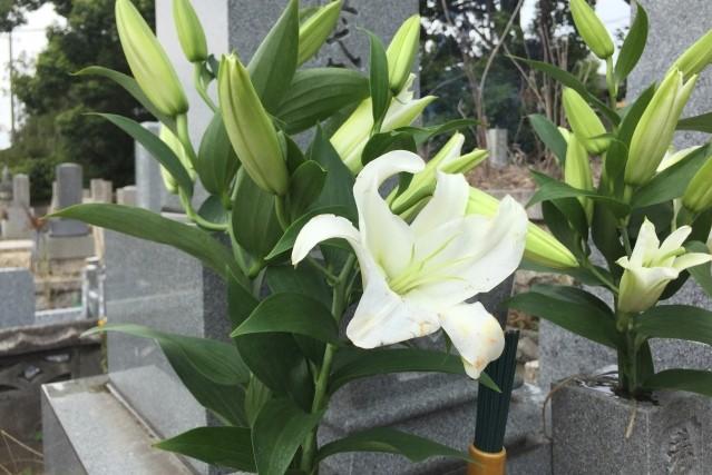 秋のお彼岸におすすめのお花のご紹介