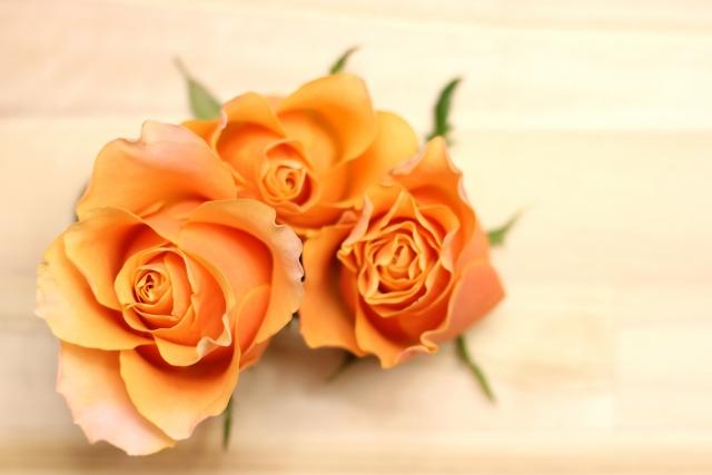 10月の誕生花のご紹介 ~秋らしい色合いのオレンジバラ~