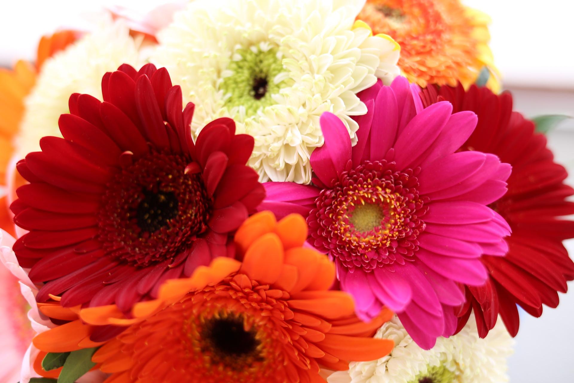 11月の誕生花のご紹介 ~陽気で明るい雰囲気の花ガーベラ~