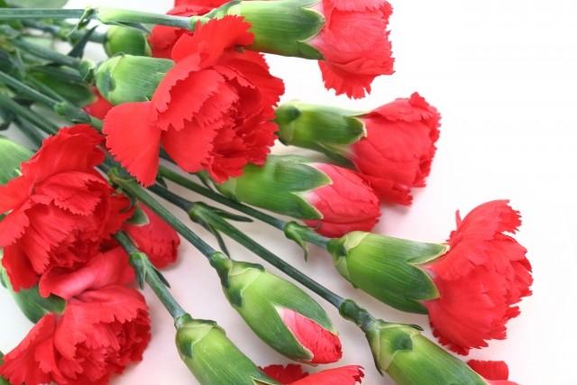 母の日に贈りたい花 〜カーネーションのご紹介〜