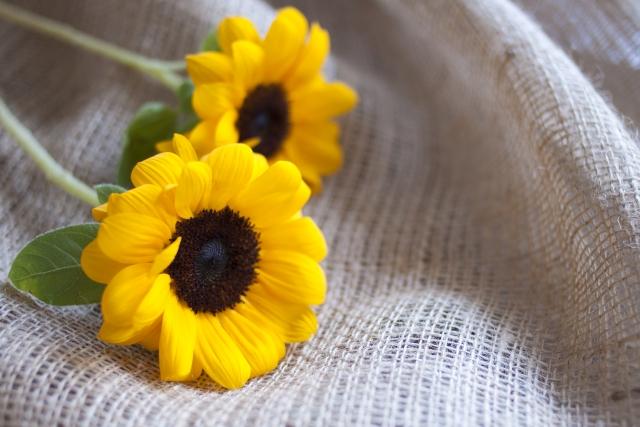 7月の誕生花のご紹介〜夏らしく爽やかなひまわり〜