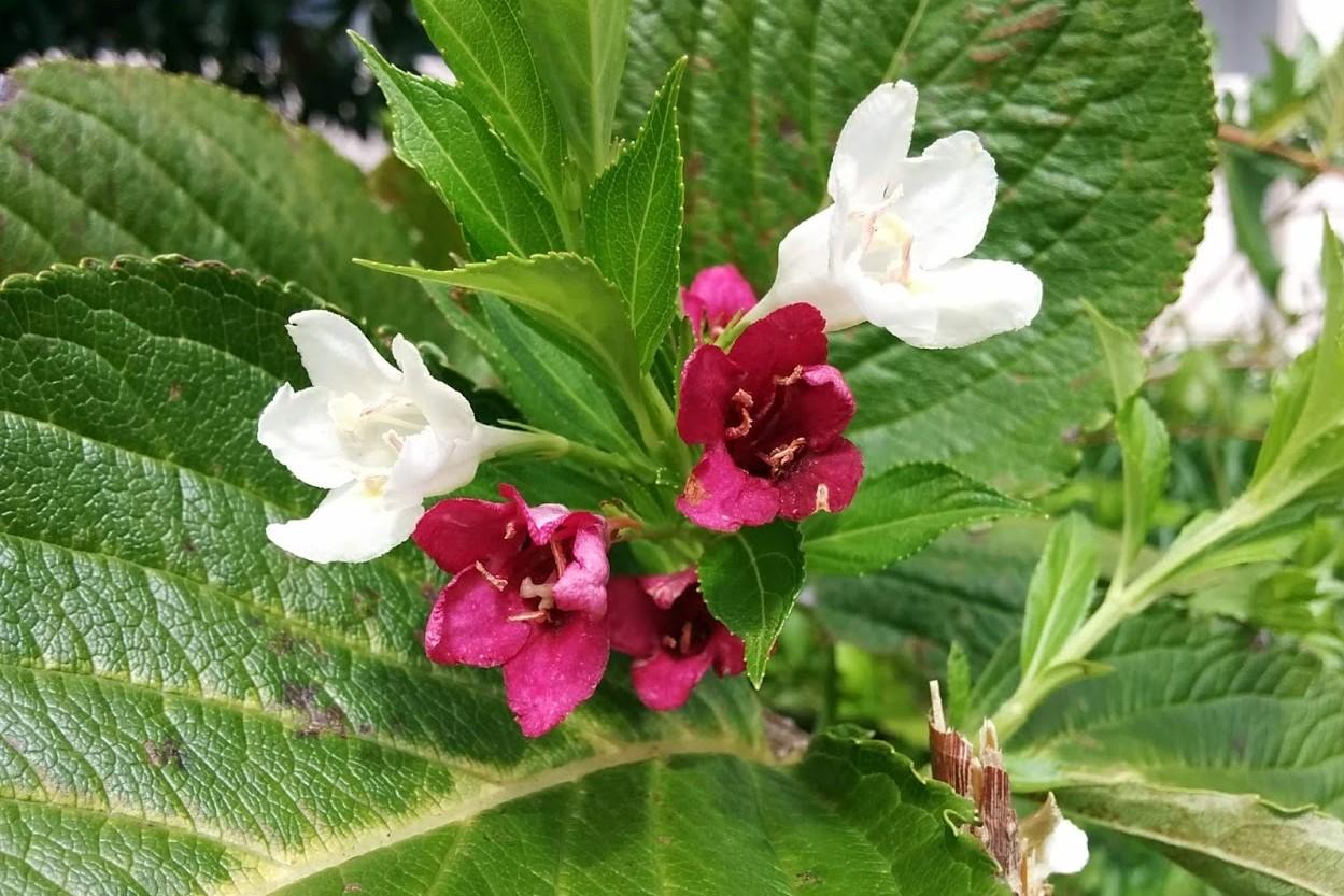 花の色が多彩なのはなぜ⁉~花と昆虫の関係~