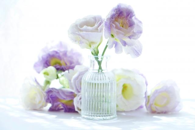 8月の誕生花のご紹介~ふんわり可愛いトルコキキョウ~