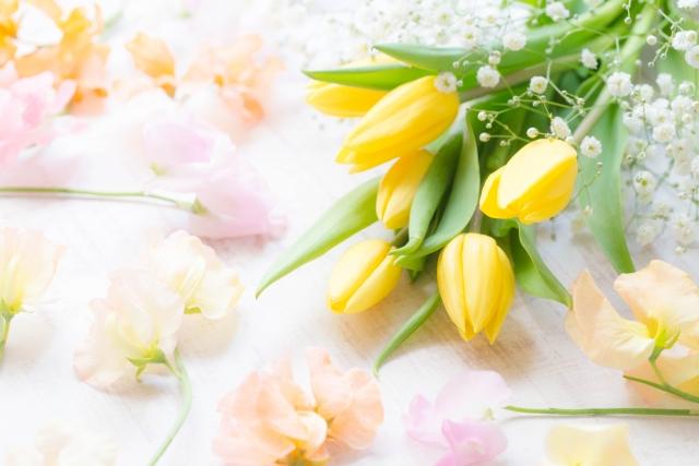 2月の誕生花~春の訪れを感じるチューリップ~
