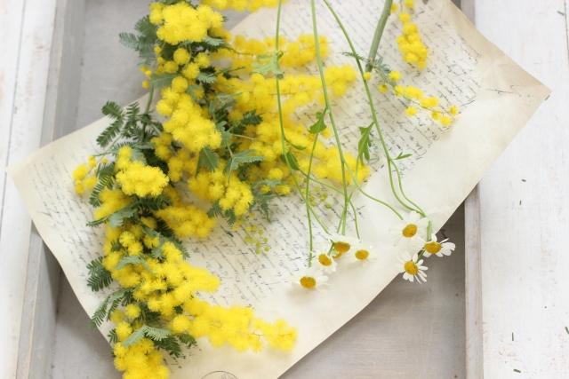国際女性デー~黄色でかわいいミモザ~