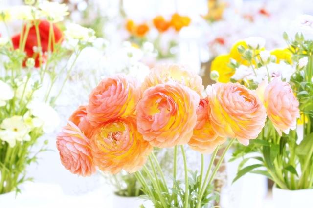 春を感じる~季節のお花5種~