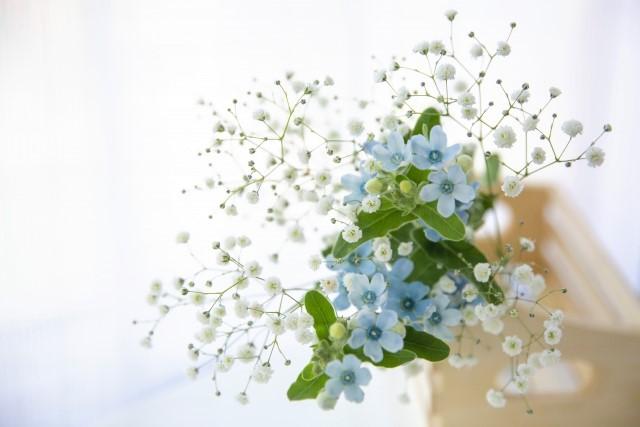 七夕におすすめのお花~星に見えるお花~