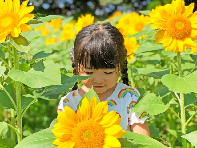 夏に贈りたい!季節のお花4選