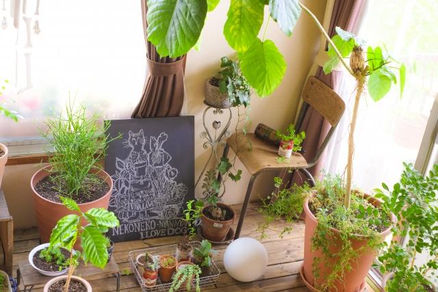 観葉植物~おすすめの種類・歴史~