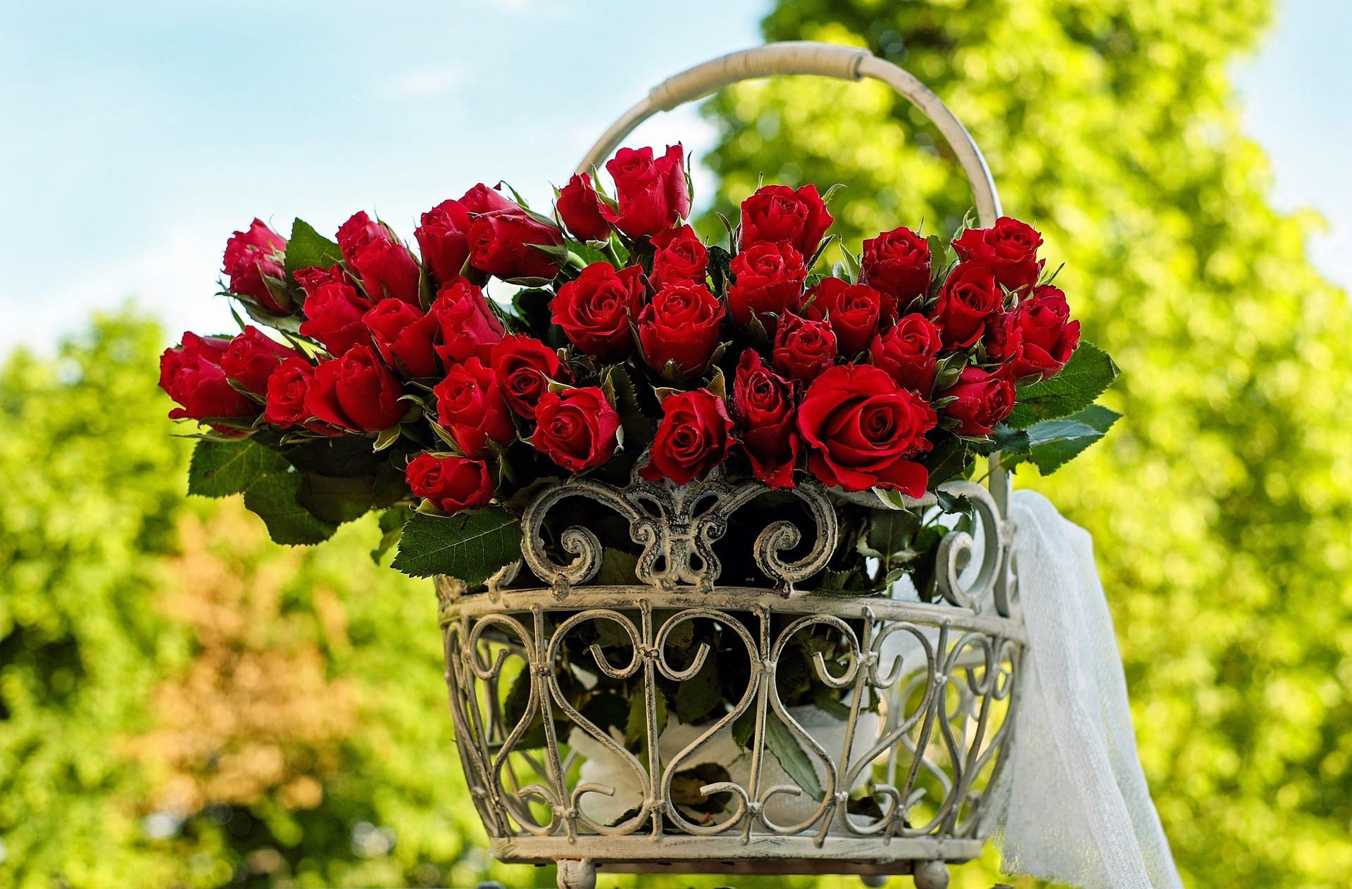 12月の誕生花~性別を問わず好まれる赤バラ~