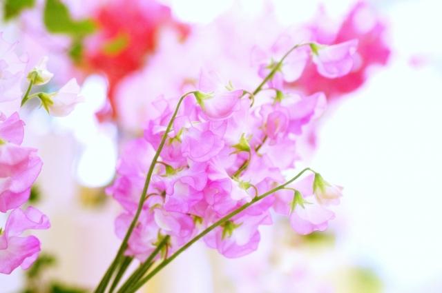 1月の誕生花~優しくかわいいスイートピー~