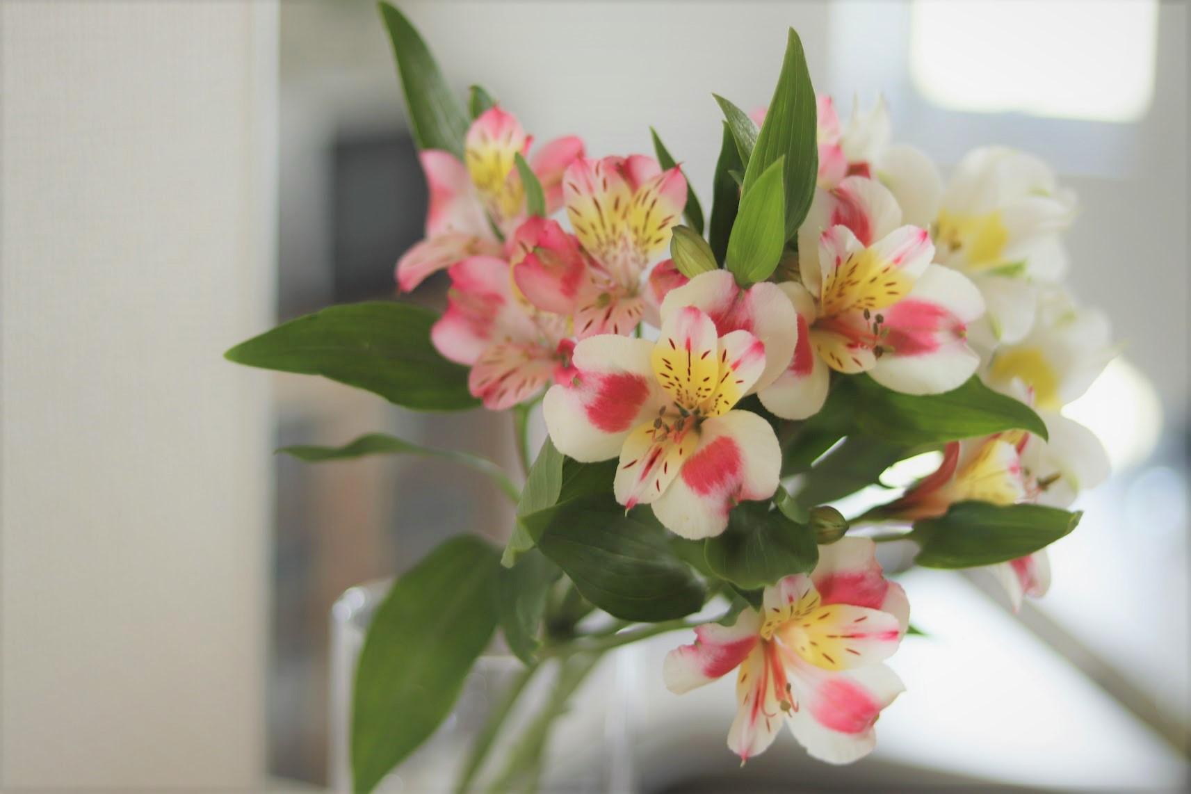4月の誕生花~花持ちがいい、アルストロメリア~
