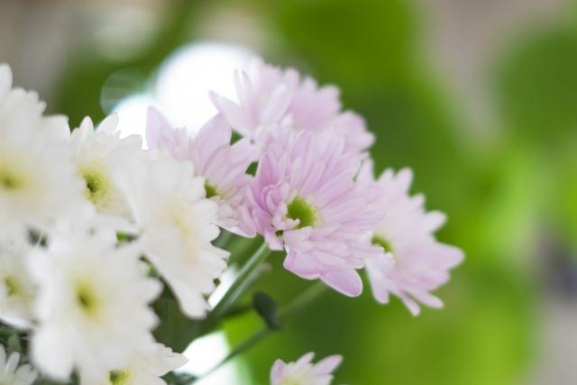お供えの花の種類~四十九日法要・ご葬儀など~