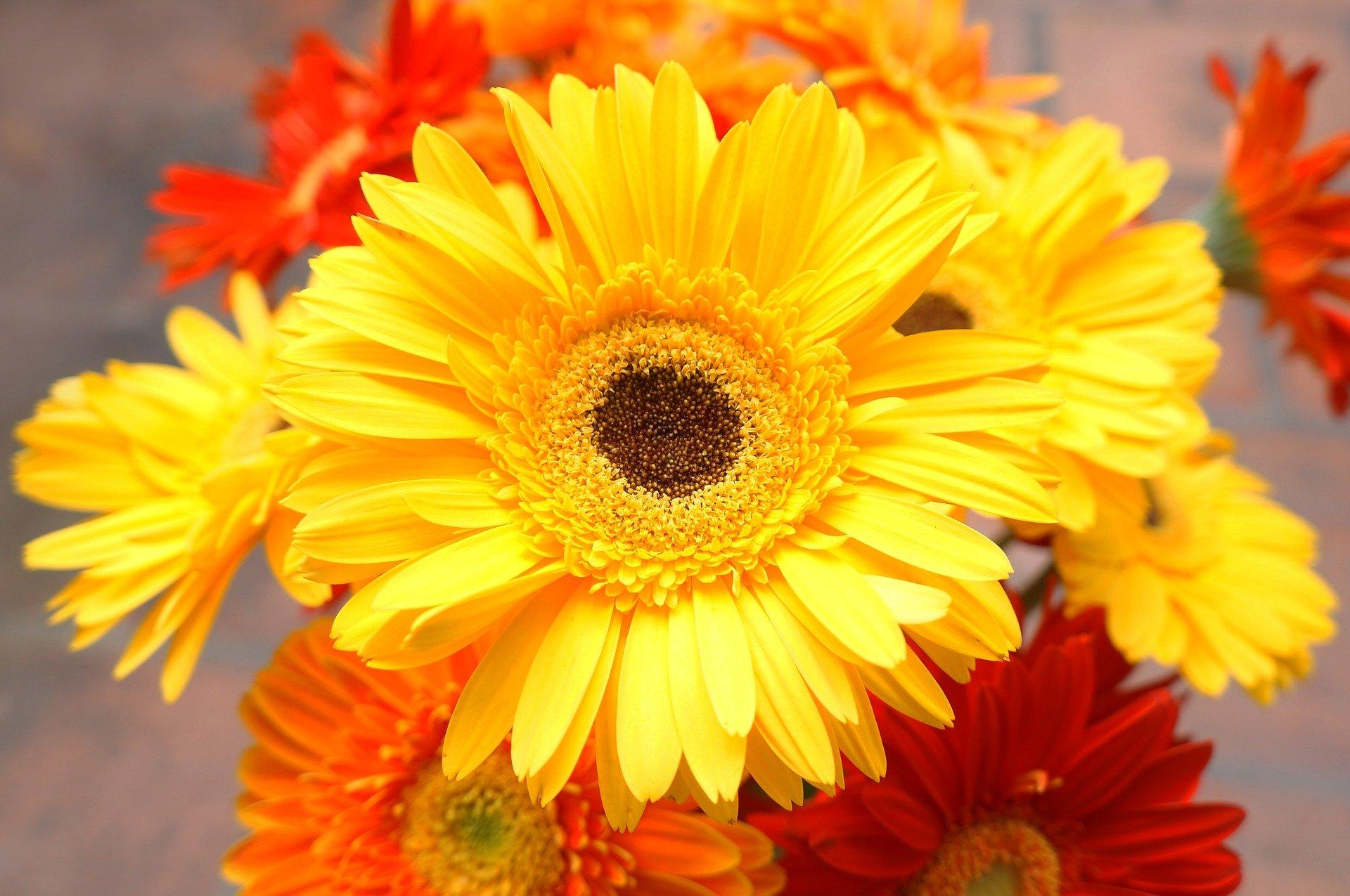 ビタミンカラーの花の種類!プレゼントにおすすめ