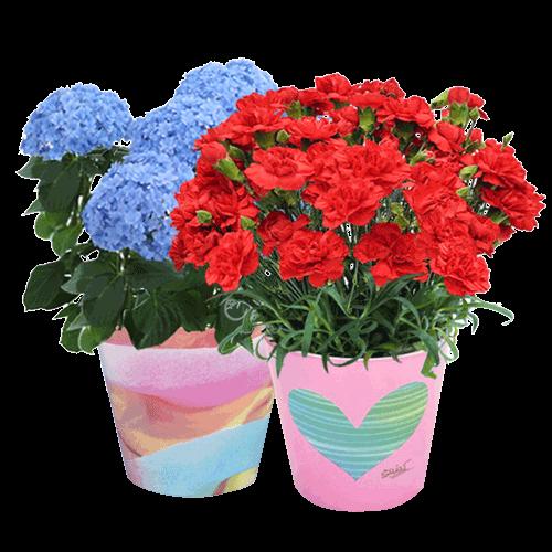 育てる楽しみを贈る産直鉢物|母の日特集2017・5月14日・日曜日の行事「お母さんありがとう!」おすすめのアンケート人気ランキング上位の定番のカーネーションから秘伝のレシピのスイーツもある企業サイト
