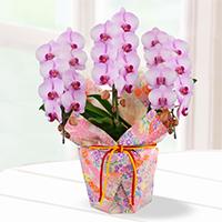 人気のボリューム満点紫陽花