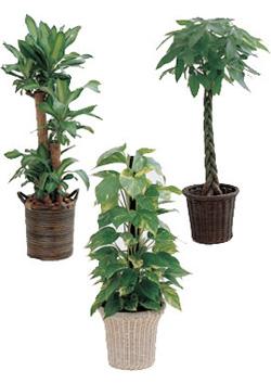 花店セレクト観葉植物おまかせイメージ