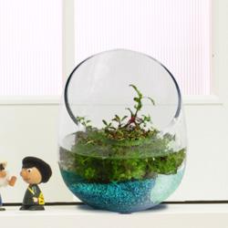 寄せ植え水草セット(ブルー)