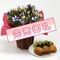 リンドウ(心美白寿)&スイーツセット