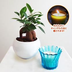 観葉植物とミニキャンドルセット(コバルトブルー/レモングラス)