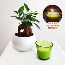 観葉植物とミニキャンドルセット(エメラルドグリーン/ホワイトウッド)