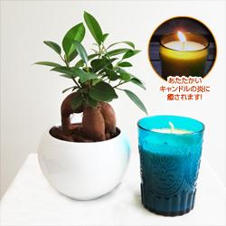 観葉植物とキャンドルセット(ブルー/レモングラス)