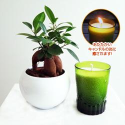 観葉植物とキャンドルセット(グリーン/ホワイトウッド)