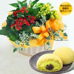 カランコエの寄せ鉢と【果子乃季】月でひろった卵(小野茶)
