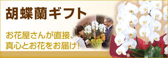 胡蝶蘭ギフト お花屋さんが直接、真心とお花をお届け!
