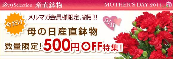メルマガ会員様限定割引|母の日カーネーション鉢・あじさい鉢500円OFF!!