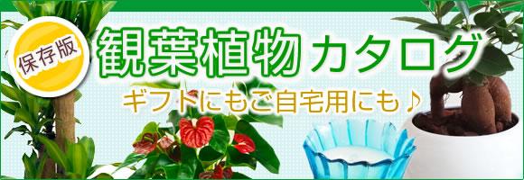 観葉植物カタログ