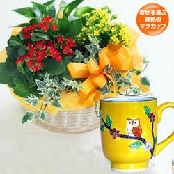 カランコエの寄せ鉢と黄交趾ふくろう マグカップ